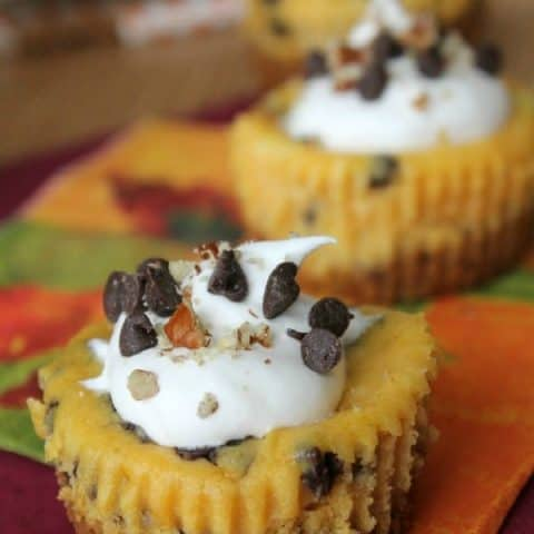 Chocolate Chip Pumpkin Cheesecake Bites
