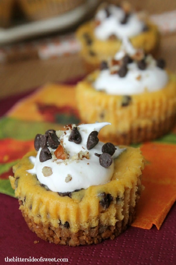 Chocolate Chip Pumpkin Cheesecake Bites | thebittersideofsweet.com